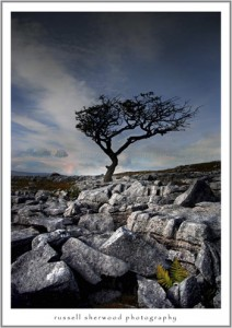 Shaped by the wind Yorkshire Dales